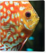 Yellow Fish Profile Canvas Print