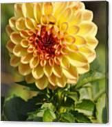 Yellow Flora Canvas Print