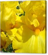Yellow Floral Irises Flowers Art Prints Baslee Troutman Canvas Print