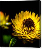Yellow Flower 5 Canvas Print