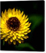 Yellow Flower 6 Canvas Print