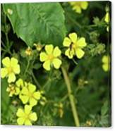 Yellow Flower And A Black Bug  Canvas Print