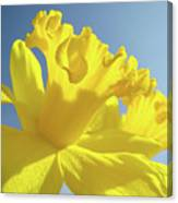 Yellow Flower Floral Daffodils Art Prints Spring Blue Sky Baslee Troutman Canvas Print