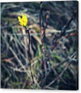 Yellow Flower In Dry Autumn Grass Canvas Print