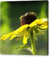 Yellow Flower In Sunlight Canvas Print