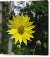 Yellow Flower In Woods Canvas Print
