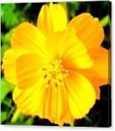 Yellow Flower On Black Background Canvas Print