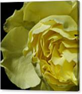 Yellow Flower On Black Canvas Print