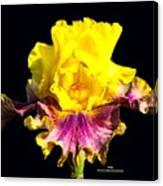 Yellow Flower On Black Canvas Print