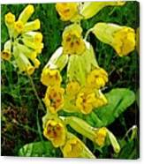 Yellow Flowers 2 Canvas Print