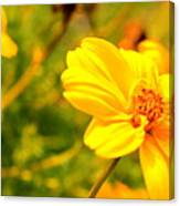 Summers Glory In Bloom By Earl's Photography Canvas Print