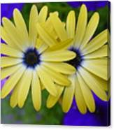 Yellow Flowers Embracing Canvas Print