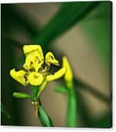Yellow Flowers I Canvas Print