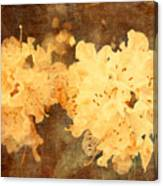 Yellow Flowers In Bloom Canvas Print