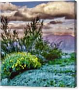 Yellow Flowers In The Desert Canvas Print
