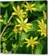 Yellow Flowers On A Green Carpet Canvas Print