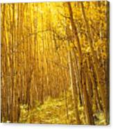 Yellow Forest Trail Canvas Print