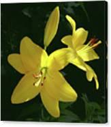 Yellow Garden Lilies Canvas Print
