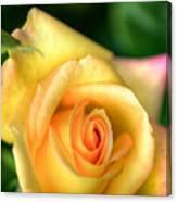 Yellow Golden Single Rose Canvas Print
