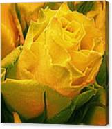 Yellow Green Rose Canvas Print