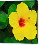 Yellow Hibiscus 3388 Canvas Print