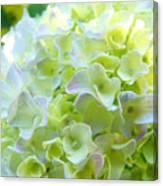 Yellow Hydrangea Flowers Art Prints Baslee Troutman Canvas Print