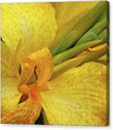 Yellow In The Morning Canvas Print