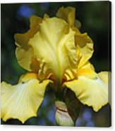 Yellow Iris Is For Passion Canvas Print