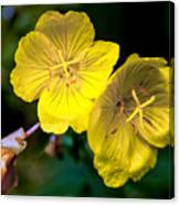 Yellow Is Gold Among The Flowers Canvas Print