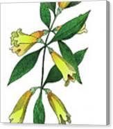 Yellow Jessamine Canvas Print