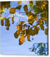 Yellow Leaf Reflections Canvas Print