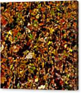 Yellow Leaves. Canvas Print