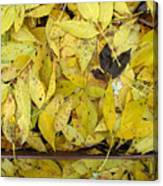 Yellow Leaves On The Ground  Canvas Print