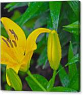Yellow Lilly Canvas Print