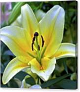 Yellow Lily Longwood Gardens Canvas Print