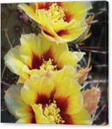Yellow Long- Spined Prickly Pear Cactus  Canvas Print