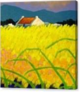 yellow Meadow Ireland Canvas Print