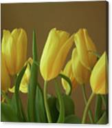 Yellow My Favorite Tulips Canvas Print