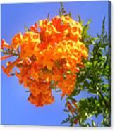 Yellow-orange Horn Flowers 01 Canvas Print