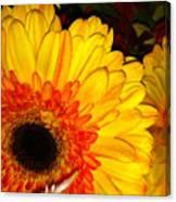 Yellow-orange Canvas Print