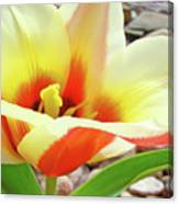 Yellow Orange Tulip Flower Art Print Baslee Troutman Canvas Print