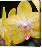 Yellow Orchid 2 Canvas Print