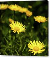 Yellow Petals Canvas Print