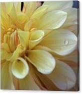 Yellow Petals With Raindrop Canvas Print