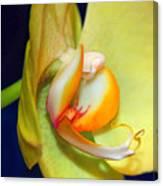 Yellow Phaelanopsis Canvas Print