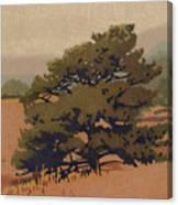 Yellow Pine Canvas Print