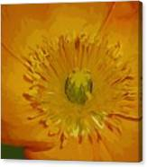 Yellow Poppy Canvas Print