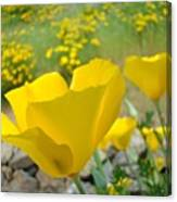 Yellow Poppy Flower Meadow Landscape Art Prints Baslee Troutman Canvas Print