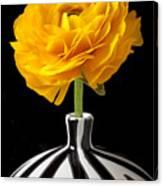 Yellow Ranunculus In Striped Vase Canvas Print