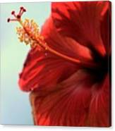 Yellow Red And Coral Hibiscus Profile Canvas Print
